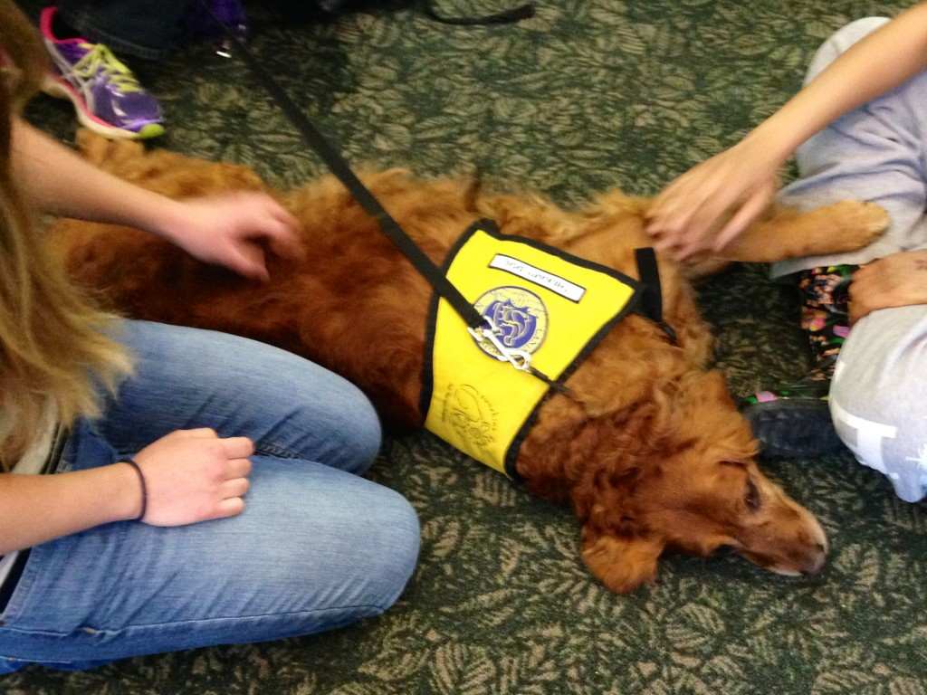 PAWS of CNY Pet Therapy SUNY ESF