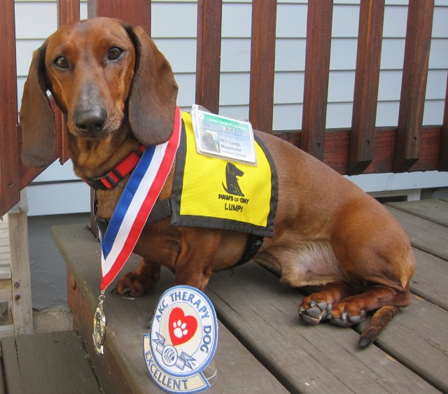 Therapy dog Lumpi earns THDX title