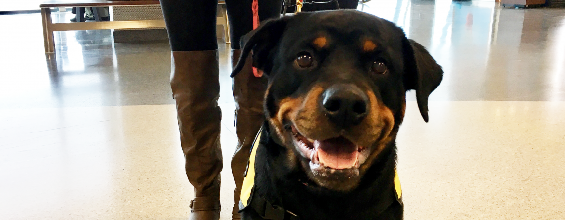 Syracuse Hancock International Airport Doesn't want Travel to be Ruff
