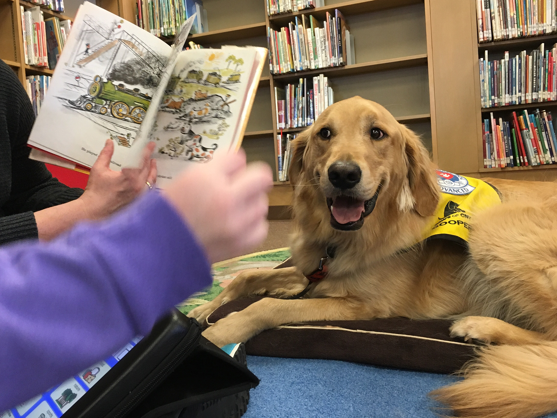 pet_therapy_reading_program_cooper_1800