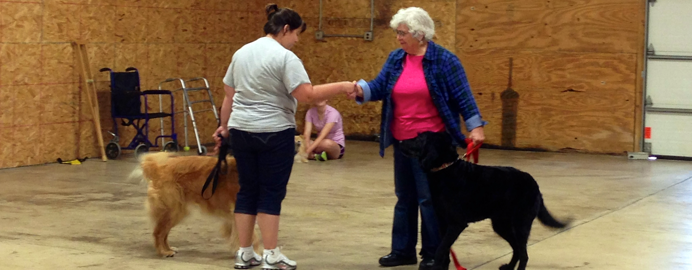 therapy_dog_training_class_syracuse