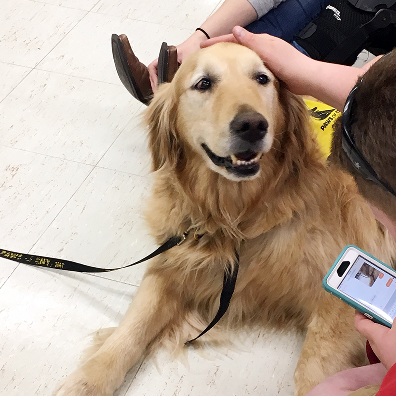 Morrisville College Pet Therapy with Cody