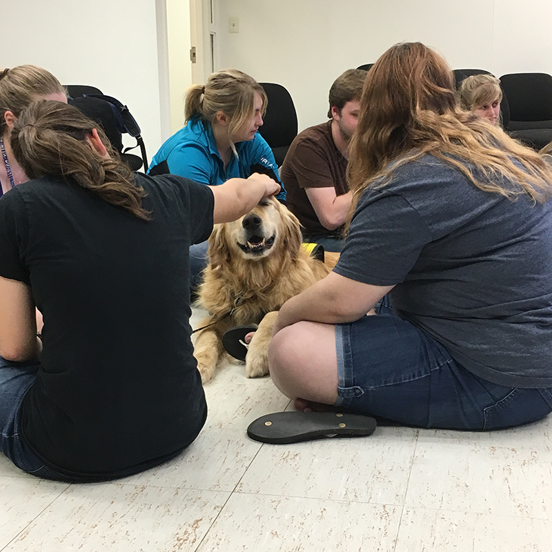 Morrisville College Pet Therapy, Cody enjoys a head massage