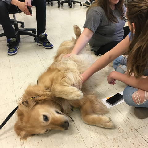 Morrisville College Pet Therapy, Cody enjoys a belly rub