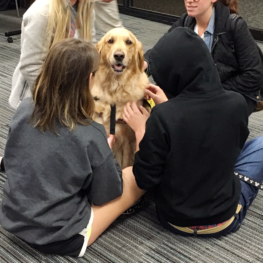 Pet Therapy at Syracuse University's Brewster Hall with Ellie