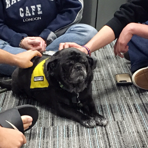 Pet Therapy at Syracuse University's Brewster Hall with Quincy