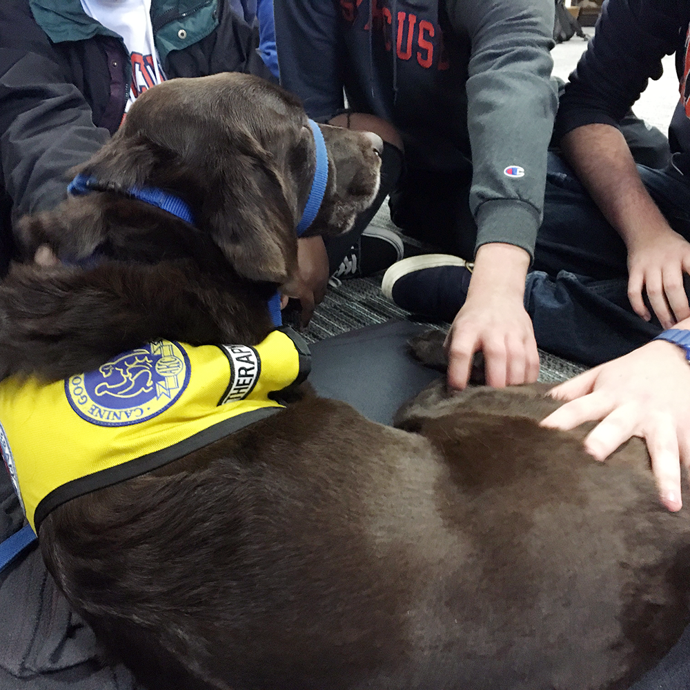Pet Therapy at Syracuse University's Brewster Hall with Blue