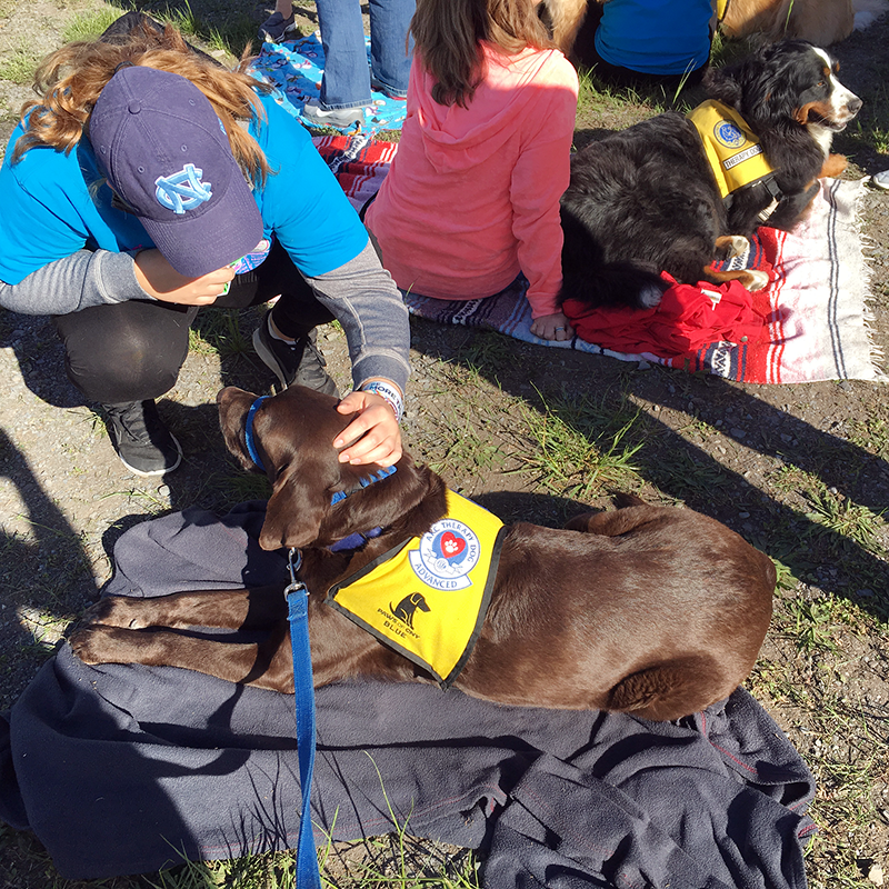 Therapy Dog Blue meets with participants at the Race for the Cure