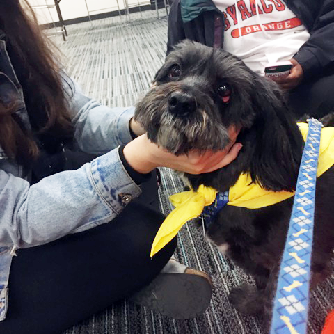 Syracuse University Pet Therapy Visit at Brewster_Hall with Sparky