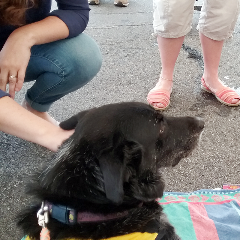 Therapy Dog Bert at Exelon Employee Wellness Event