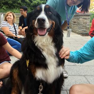 Pet_Therapy_Syracuse_University_Stella_1