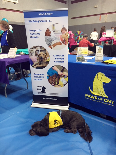 Elmcrest_Wellness_Fair_2017_Pet_Therapy_Sparky