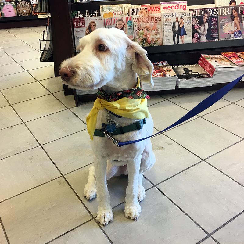 Pet Therapy Bookfair - Graham