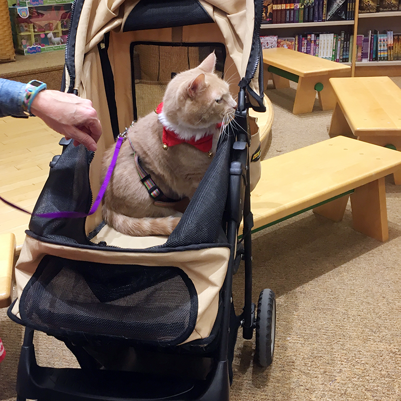 Pet Therapy Bookfair - Peaches