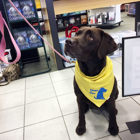 Pet Therapy Bookfair -Molly