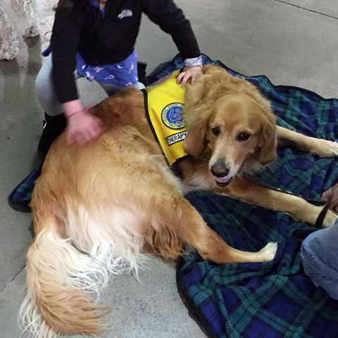 Pet-Therapy Teams at Syracuse Kids Expo - Cody
