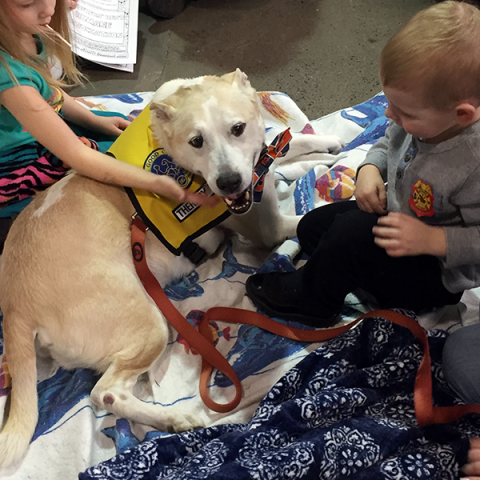 Pet-Therapy Teams at Syracuse Kids Expo - Dutch