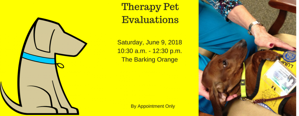 Therapy Pet Evaluations Syracuse