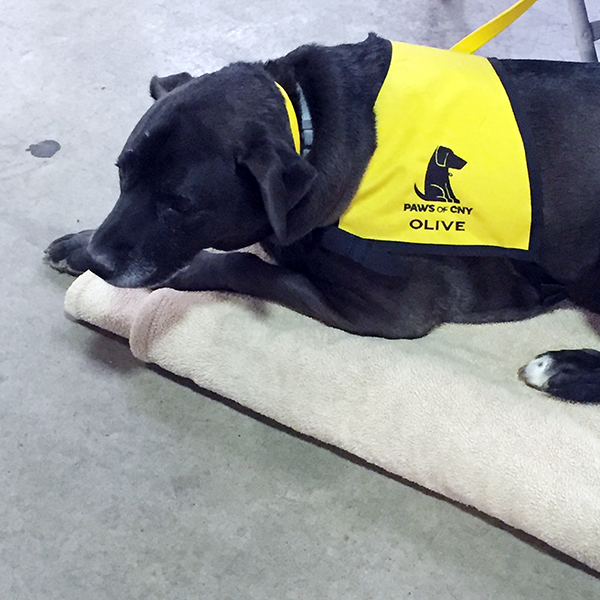 Pet-Therapy Teams at Syracuse Kids Expo - Olive