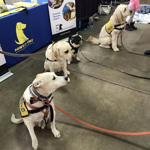 Pet-Therapy-Syracuse-Kids_Team