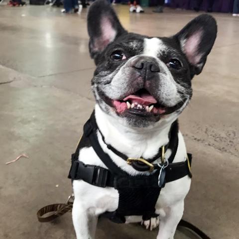 Pet-Therapy-Syracuse-Kids_Expo_Yogi