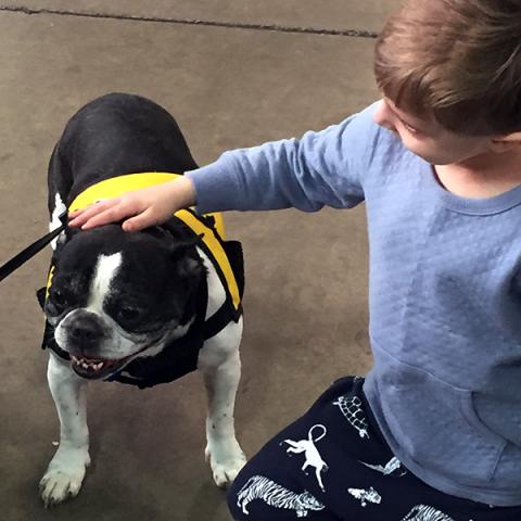 Pet-Therapy Teams at Syracuse Kids Expo - Yogi