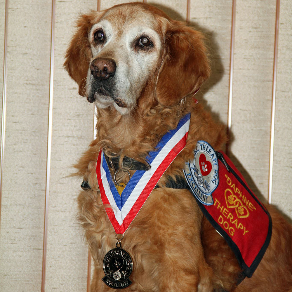 Retired Therapy Dog Daphne