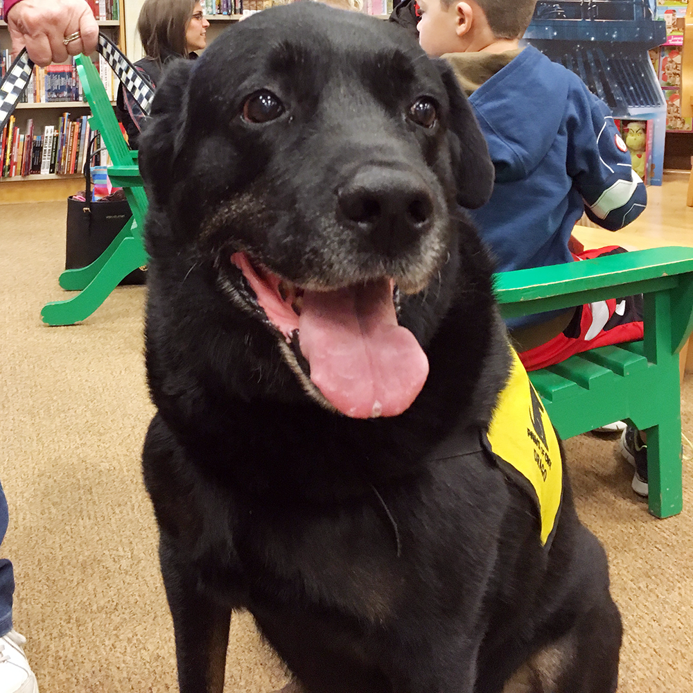 Retired Therapy Dog Drago