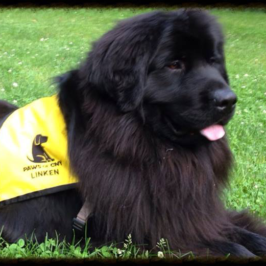 Retired Therapy Dog Linken