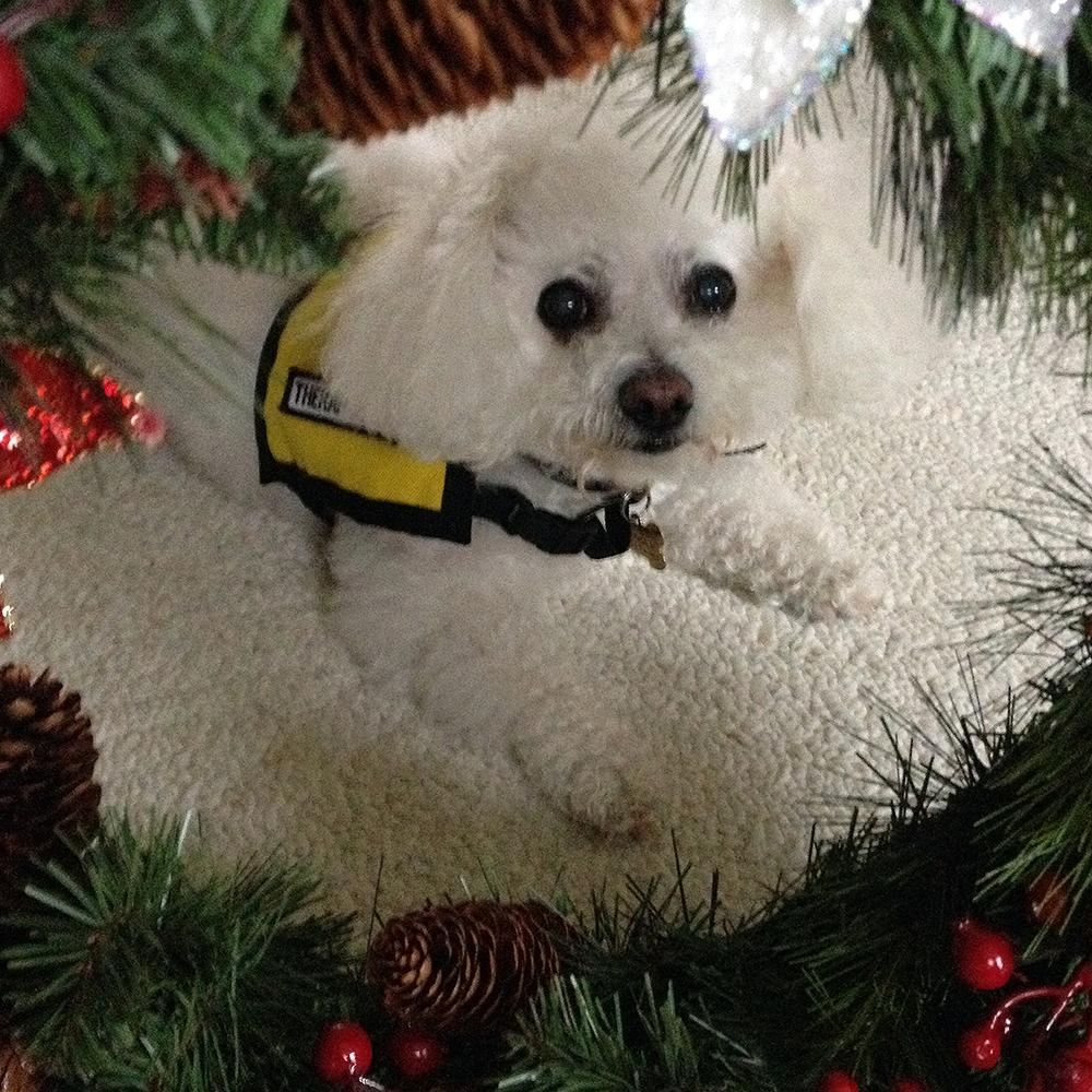 Retired Therapy Dog Turbolina